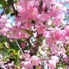 花の街道「カイドウ街道」