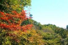 紅葉観賞マップ:秩父市吉田・城峯山周辺