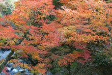 紅葉観賞マップ:秩父市大滝・中津峡