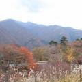 otaki_koyo (5)