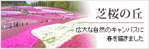 Hill of ground pink