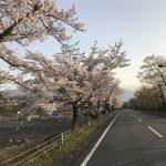 ミューズパーク桜