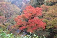 2013/11/05 (火):中津峡の様子