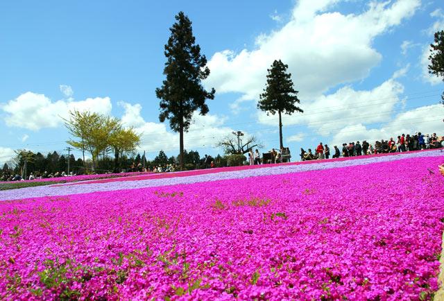 https://navi.city.chichibu.lg.jp/wp/wp-content/uploads/2014/09/p_nyusen04l.jpg