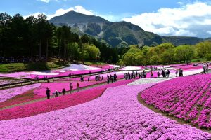 最優秀賞「芝桜と武甲山のコラボ」高澤洋次 様