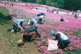 入賞「今年も咲きました」吉野宏映 様