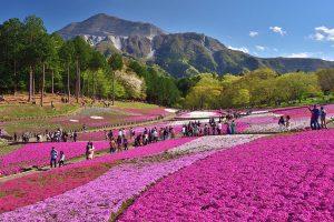 最優秀賞「武甲山と芝桜の絶景」髙澤 洋次 様