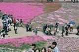 入選「思い出の花園」吉野 宏映 様