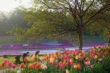 入選「新緑の桜の木と芝桜」堀均様