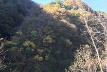 浦山渓谷紅葉