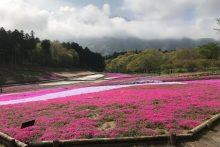 300412芝桜の丘