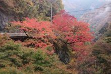 金蔵落しの紅葉