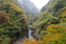 金蔵落しの渓流の画像