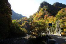 中津峡の紅葉画像
