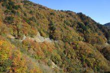 滝川渓谷の紅葉