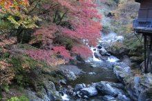 大血川渓谷の紅葉