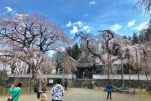 2019/03/28 (木):清雲寺の様子