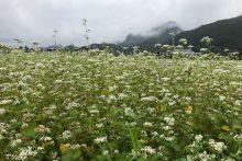 0622そばの花