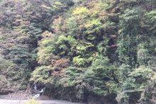 1031浦山渓谷紅葉
