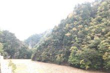 1031中津峡紅葉