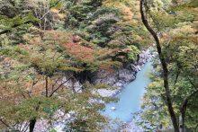 1109大血川渓谷紅葉