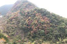 1111浦山渓谷紅葉