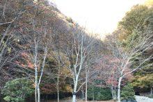 1117滝川渓谷紅葉