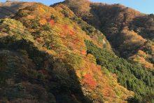 1117大血川渓谷紅葉