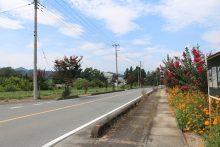 サルスベリ街道