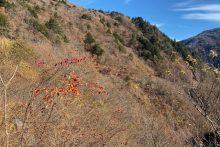 1115滝川渓谷