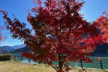 1115中津峡紅葉