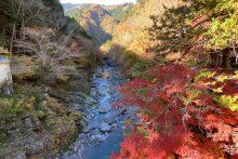1115登竜渓紅葉