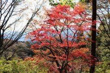 城峯山周辺の紅葉画像