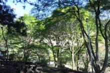 城峯山の紅葉